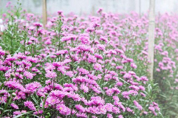 y nghia hoa thach thao