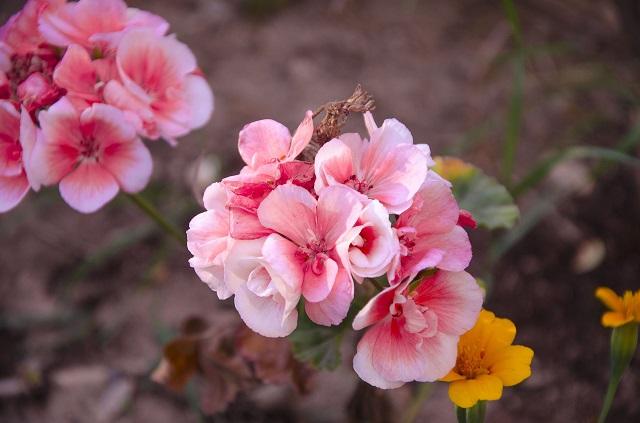 hoa hai duong dep nhat