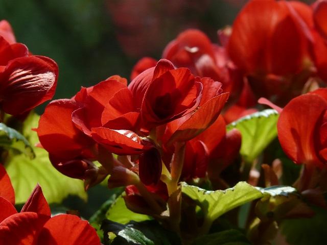 cay hoa hai duong