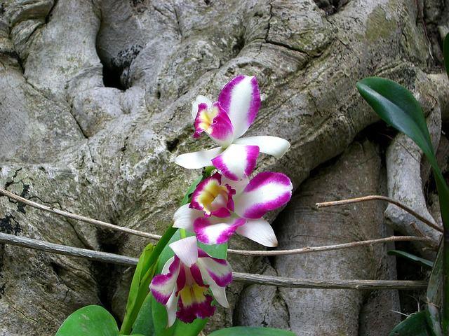 Cau chuyen ve hoa lan