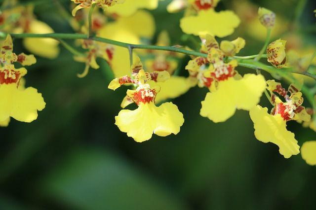 cau chuyen y nghia ve hoa lan