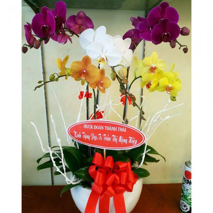 Hoa tang me 20-10