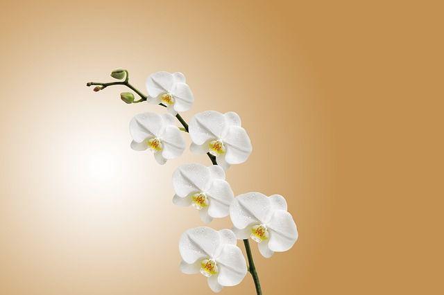 su tich cay hoa lan