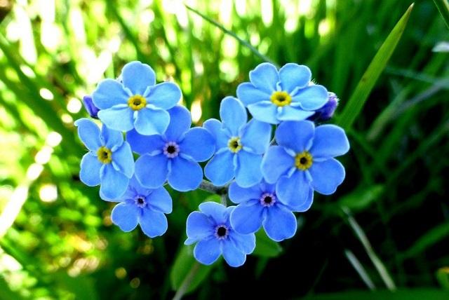 hoa luu ly
